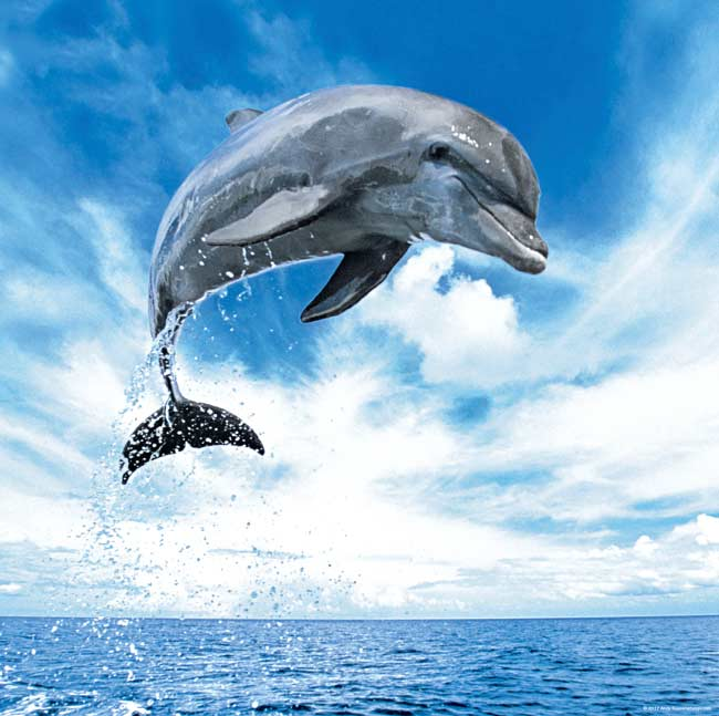 Dolphin Jigsaw Puzzle Puzzlewarehouse Com