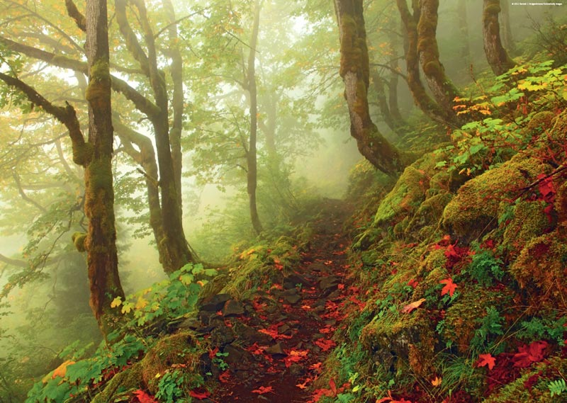 Path Forest Jigsaw Puzzle