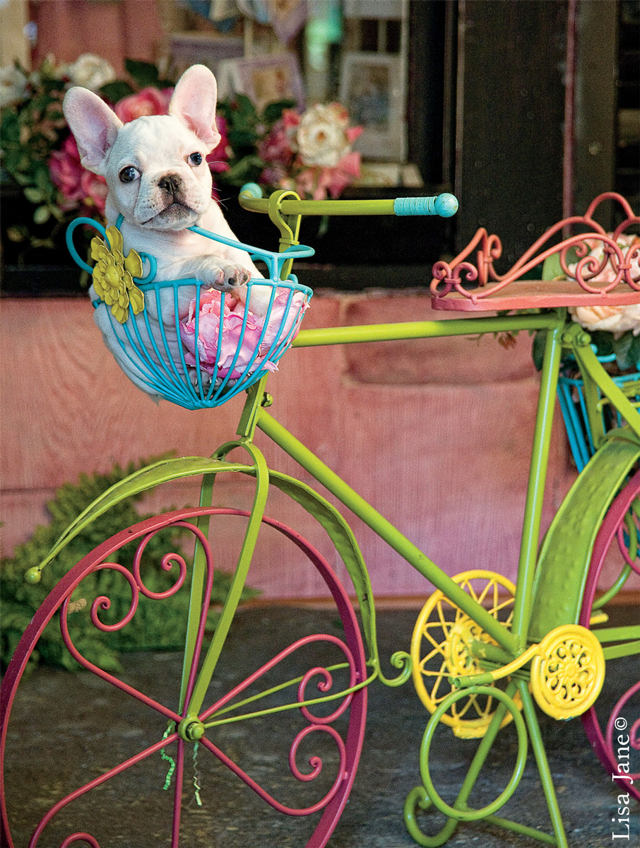 Bike Basket Bulldog Dogs Jigsaw Puzzle