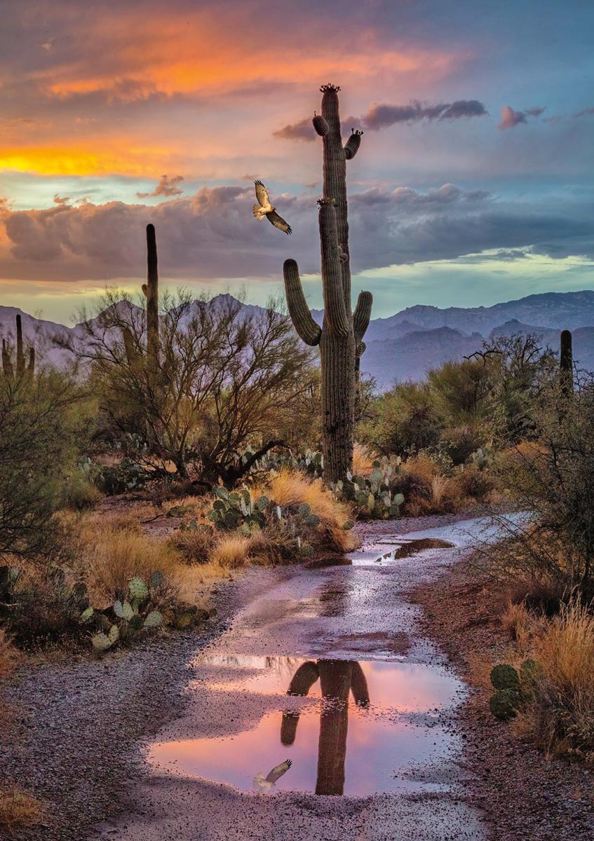 Cactus Reflection, Arizona Landscape Jigsaw Puzzle