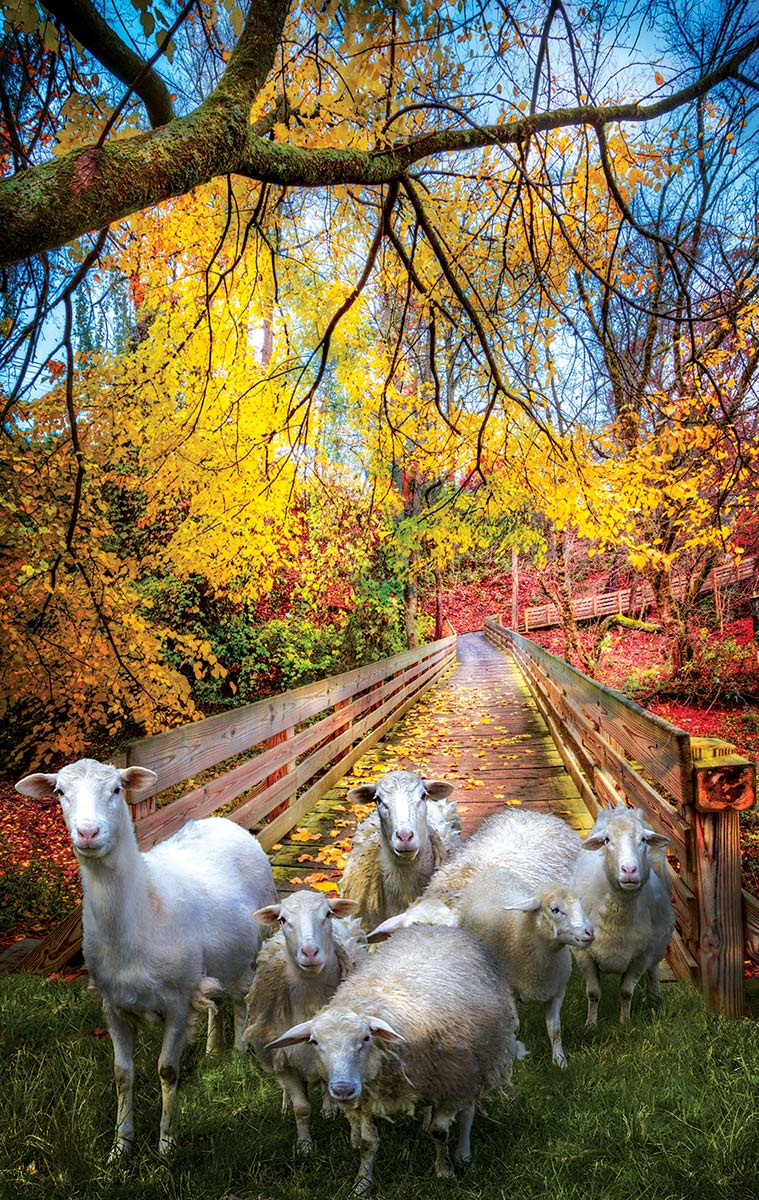 Sheep Crossing Animals Jigsaw Puzzle