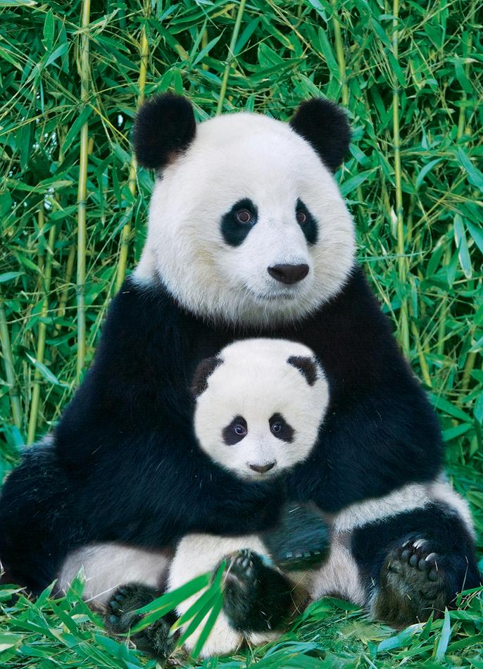 panda and baby  small box