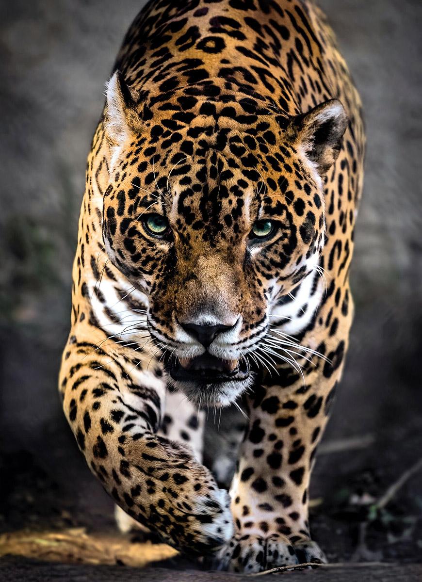 Walk of the Jaguar Wildlife Jigsaw Puzzle
