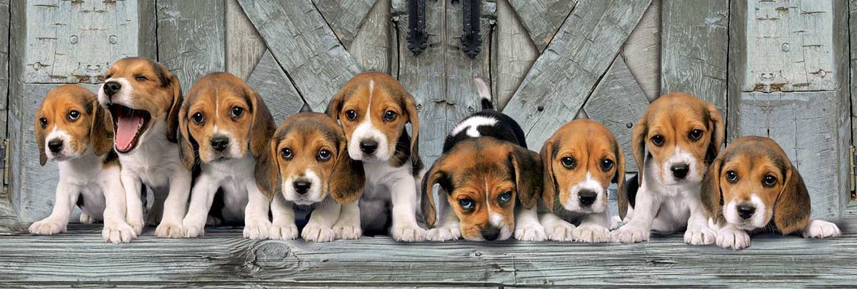 Beagles Dogs Jigsaw Puzzle
