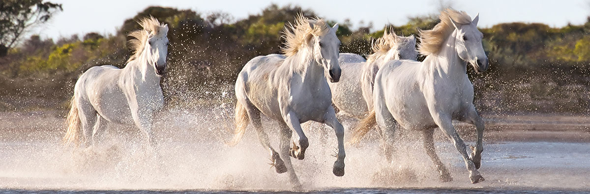 Running Horses - Scratch and Dent Horses Jigsaw Puzzle