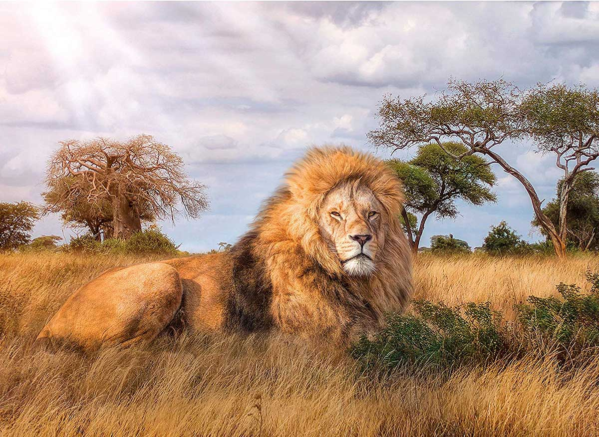 The King Lions Jigsaw Puzzle