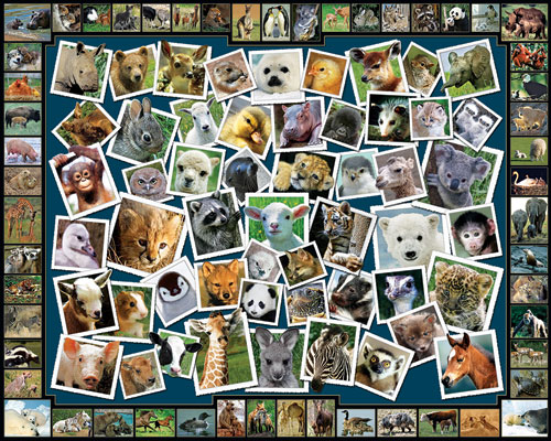 Baby Faces Other Animals Jigsaw Puzzle