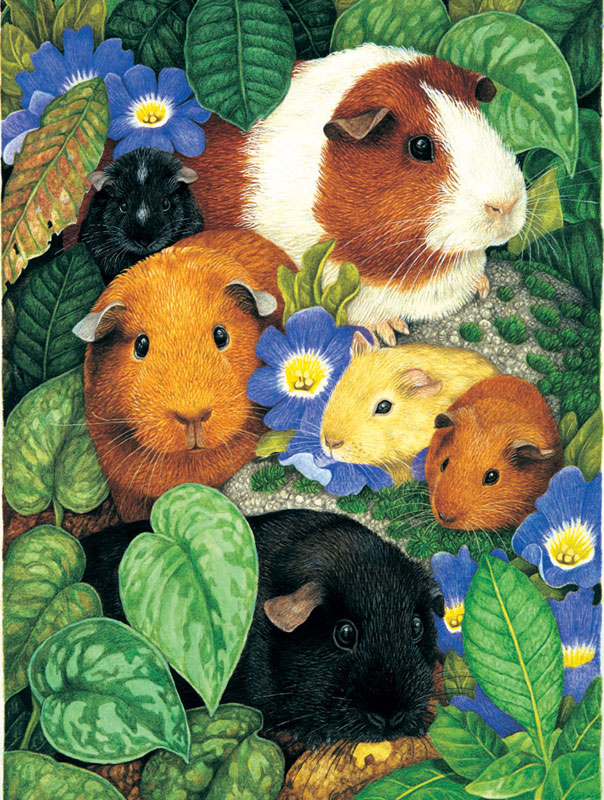 Guinea Pigs Other Animals Children's Puzzles