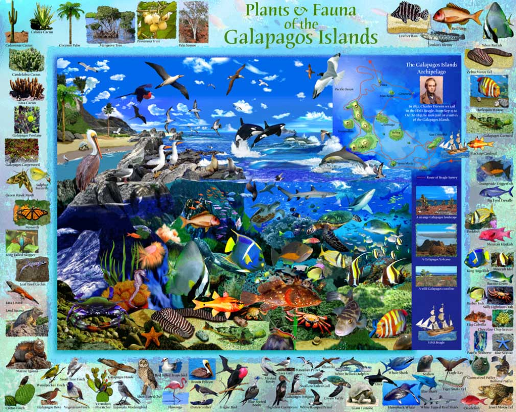 Galapagos Under The Sea Jigsaw Puzzle