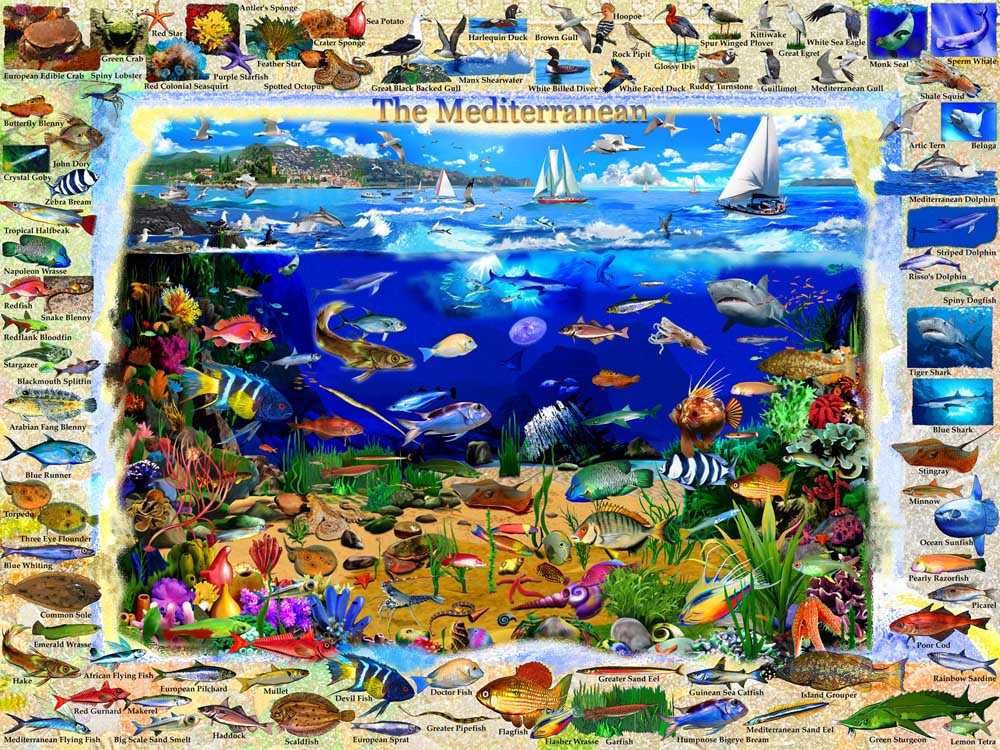 The Mediterranean Under The Sea Jigsaw Puzzle