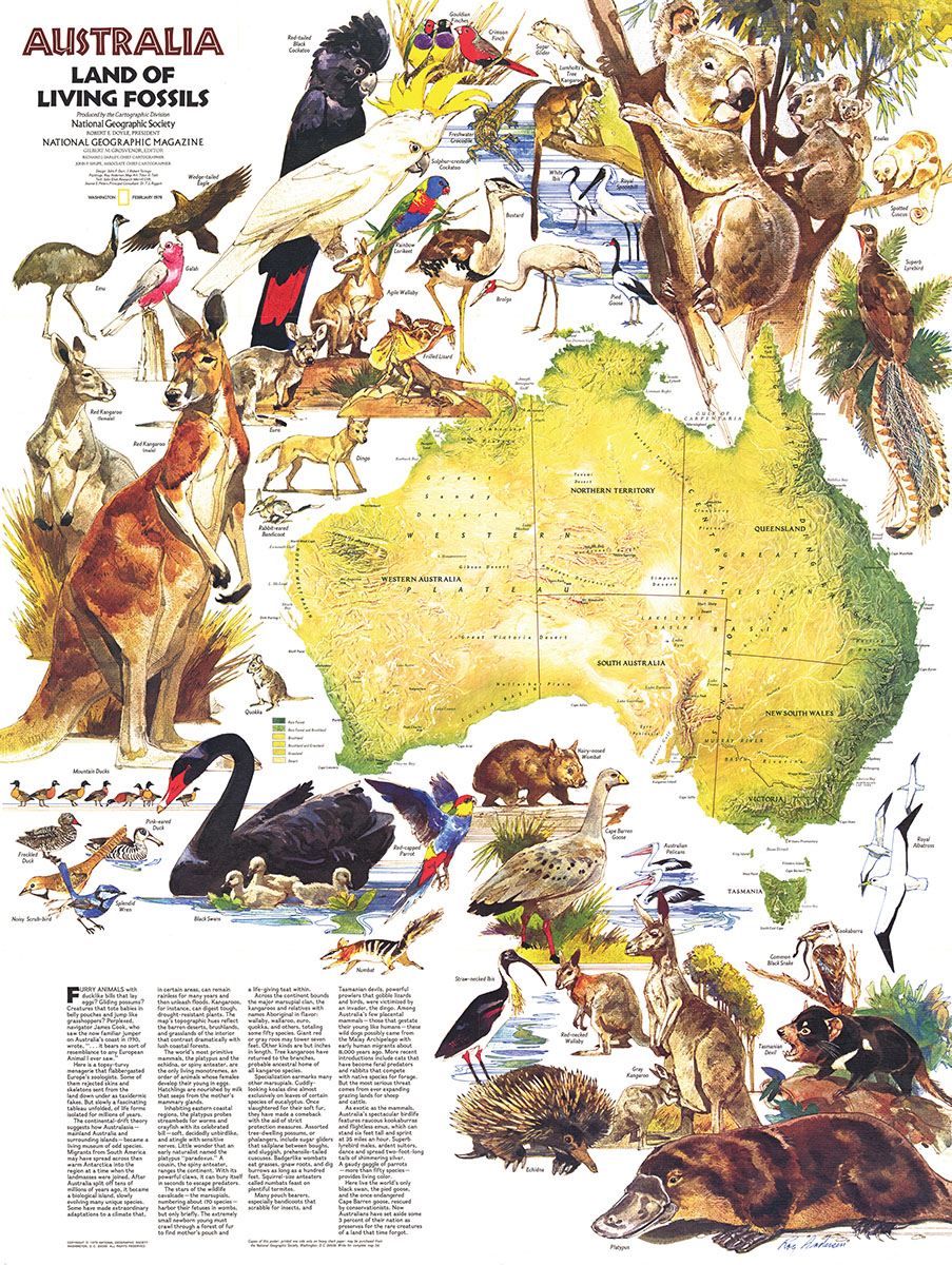 Map Of Australia Jigsaw Puzzle.Australia Animals