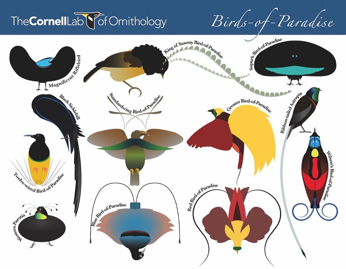 Birds-Of-Paradise (Mini) Birds Jigsaw Puzzle