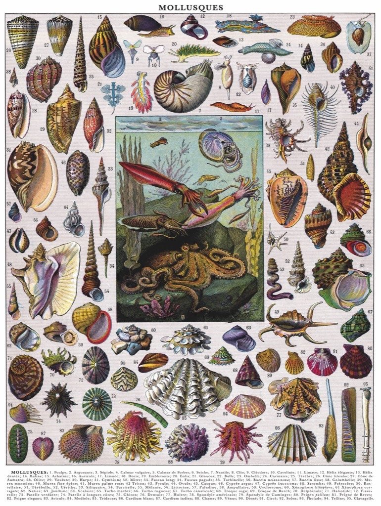 Mollusks Collage Jigsaw Puzzle