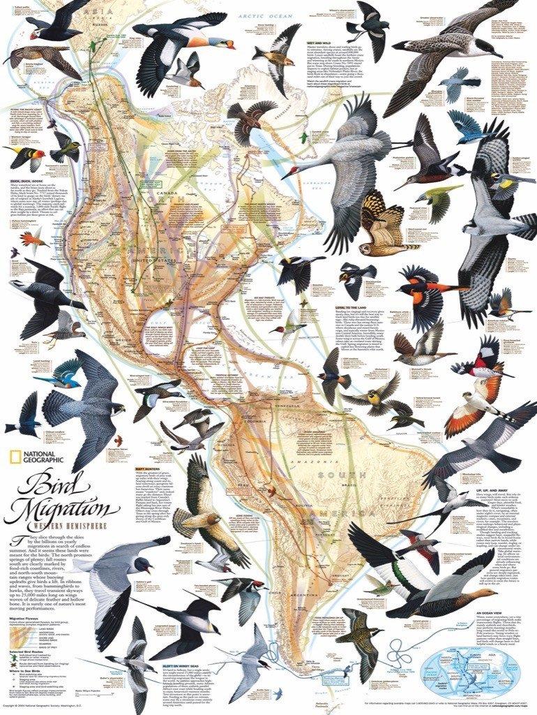 Bird Migration Birds Jigsaw Puzzle