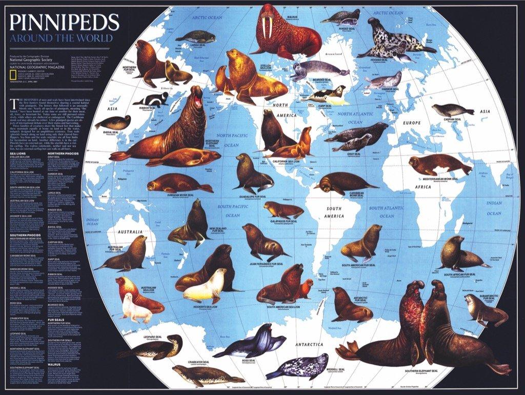 Pinnipeds Animals Jigsaw Puzzle