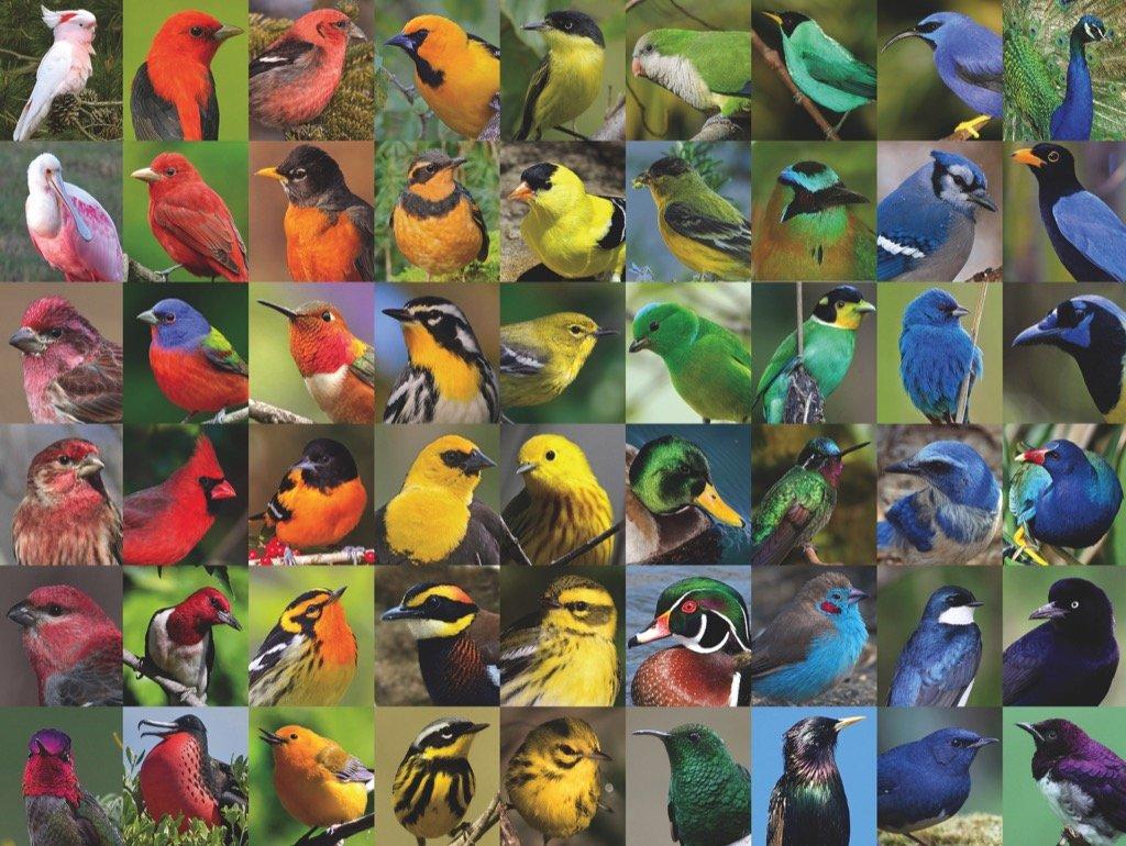 Rainbow of Birds Birds Jigsaw Puzzle