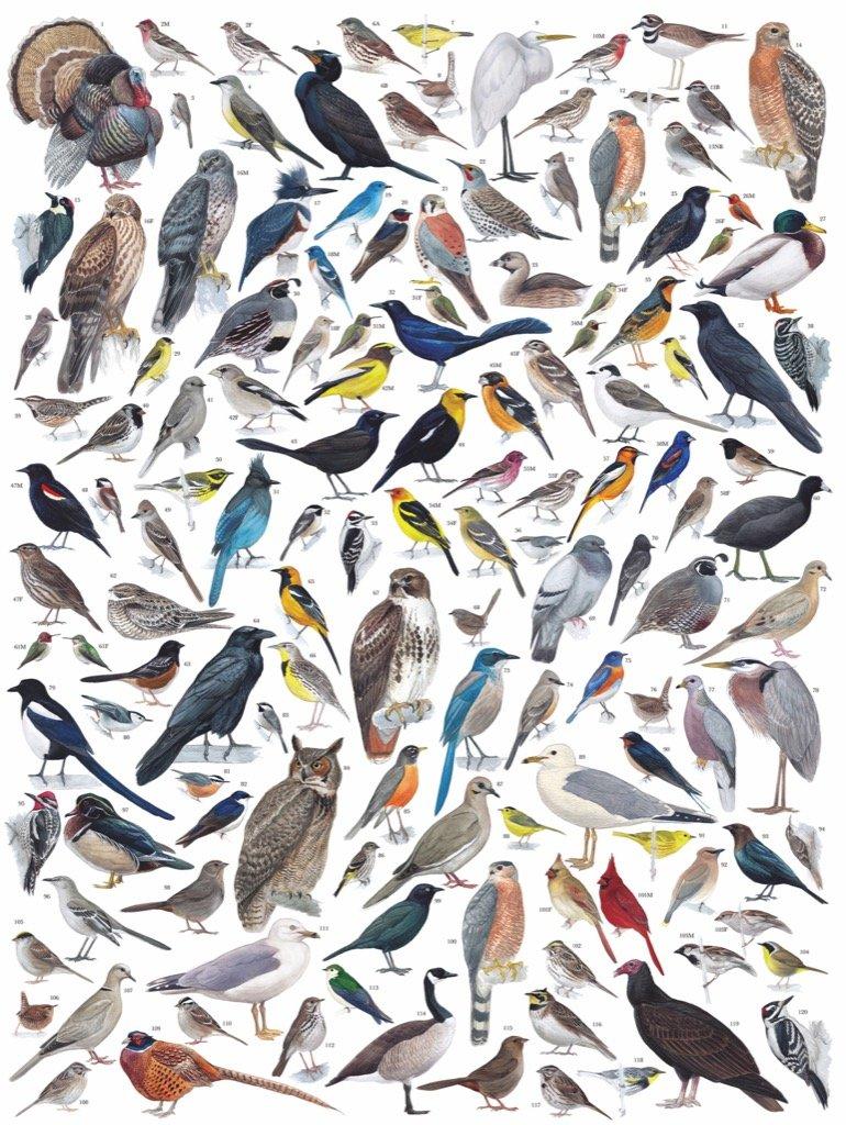 Birds of Western America Birds Jigsaw Puzzle