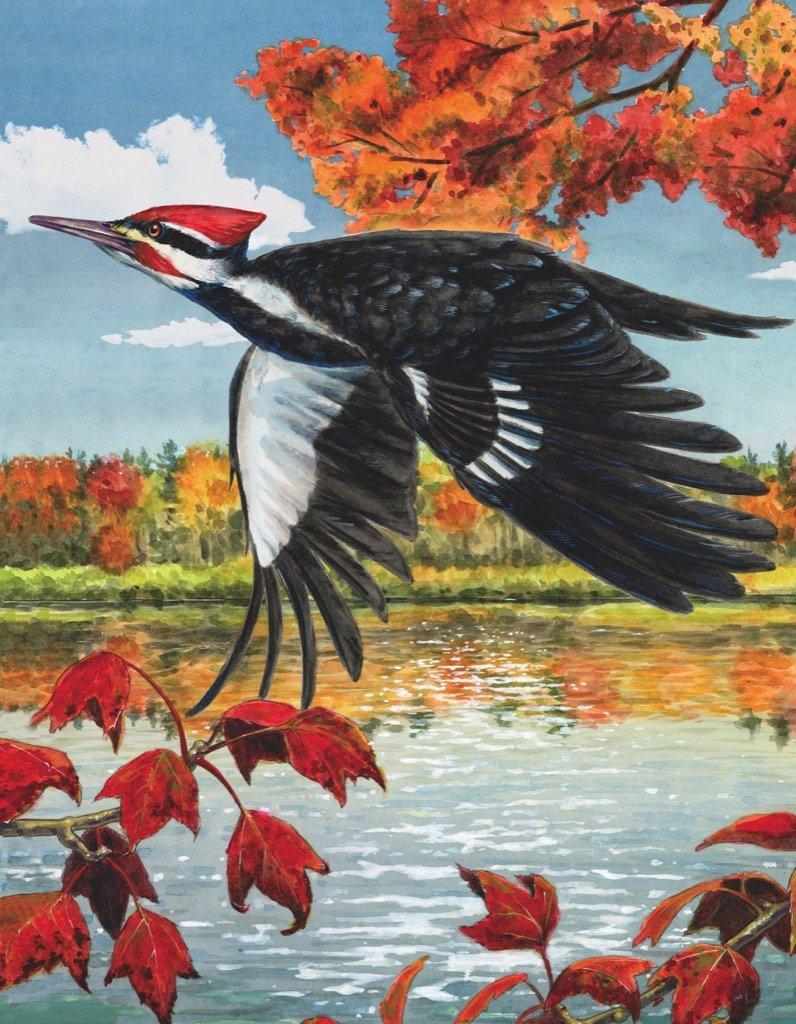 Pileated Woodpecker  (Mini) Birds Jigsaw Puzzle