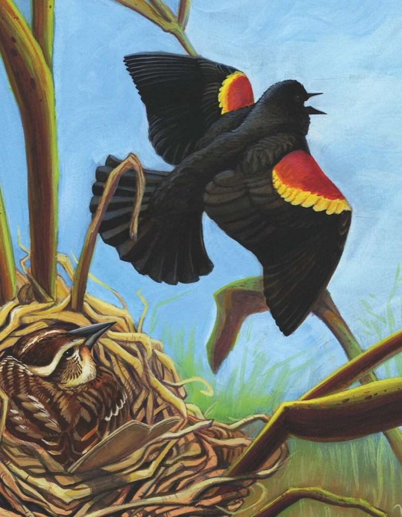 Red-winged Blackbird Mini Birds Jigsaw Puzzle