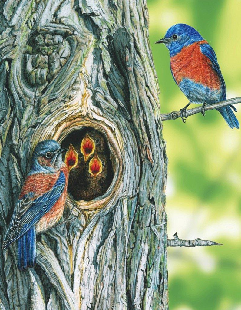 Western Bluebird  (Mini) Birds Jigsaw Puzzle