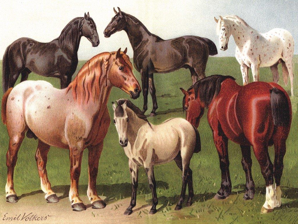 Horse Breeds Horses Jigsaw Puzzle