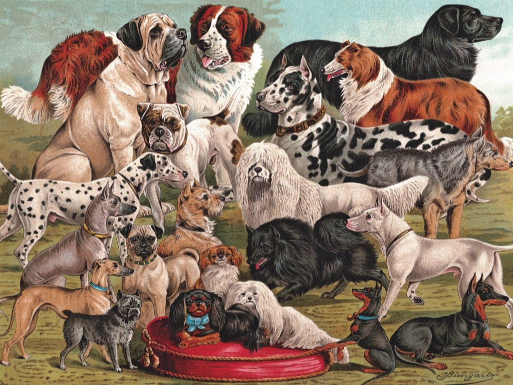 Dog Breeds Dogs Jigsaw Puzzle
