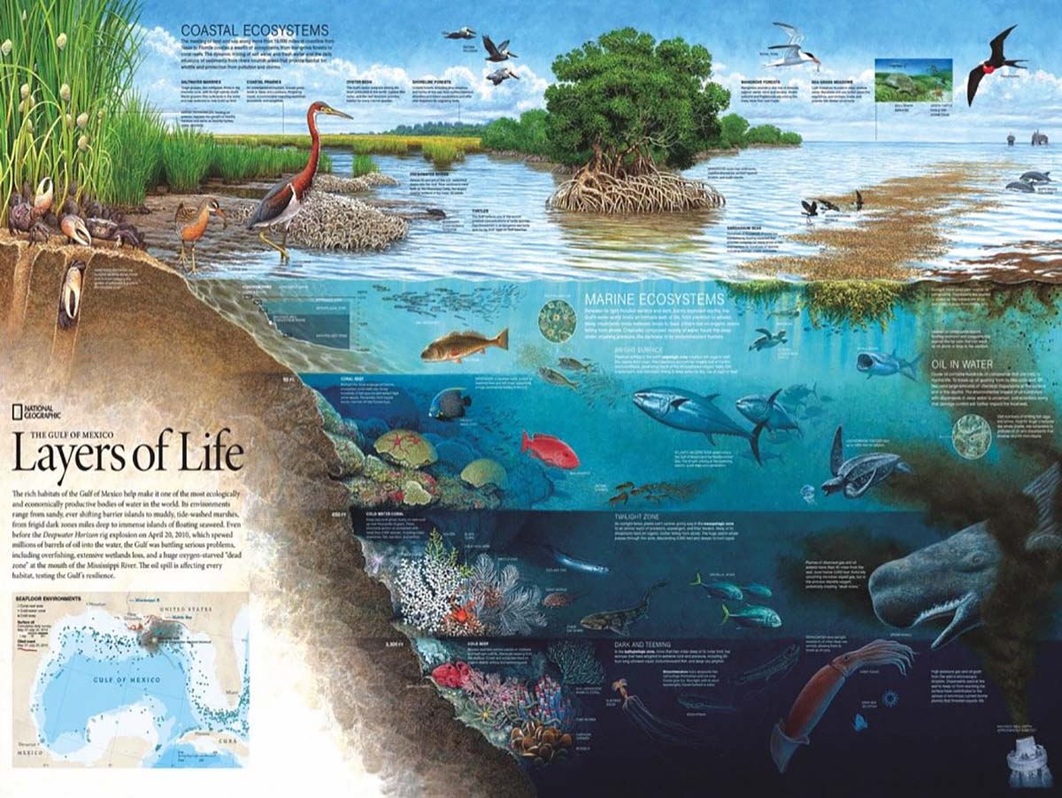 Layers of Life Animals Jigsaw Puzzle