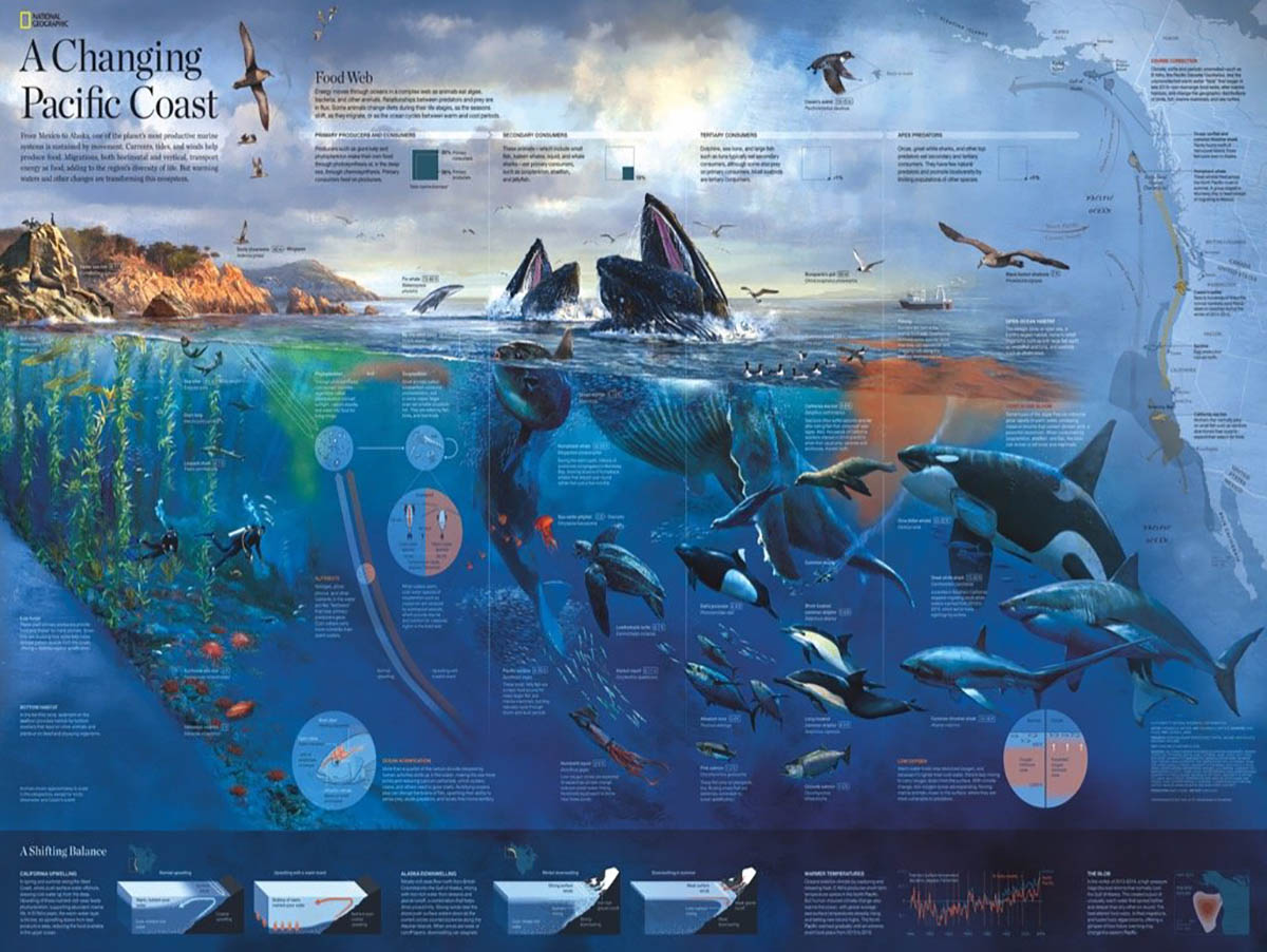 Pacific Coast Under The Sea Jigsaw Puzzle