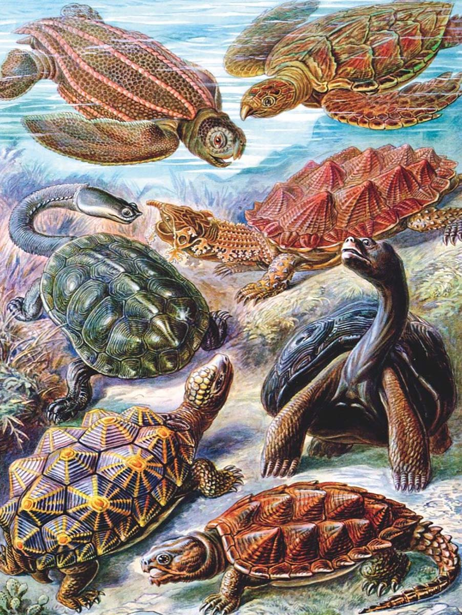 Turtles Animals Jigsaw Puzzle