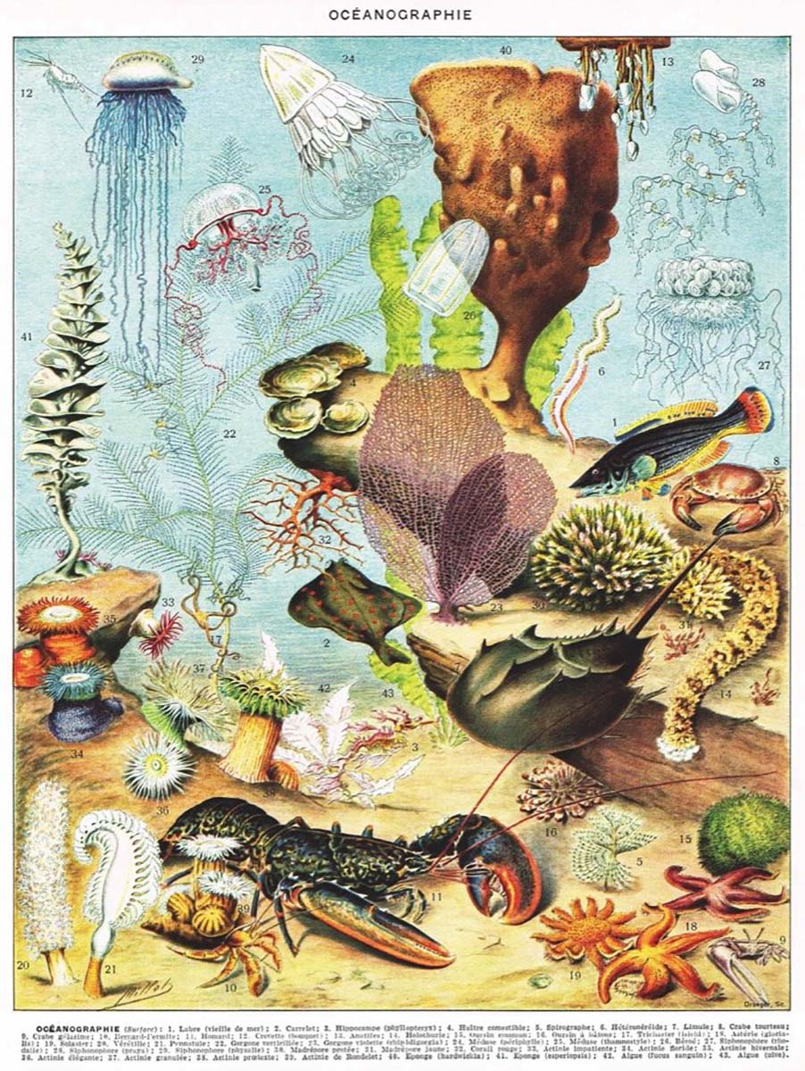 Océanographie Under The Sea Jigsaw Puzzle