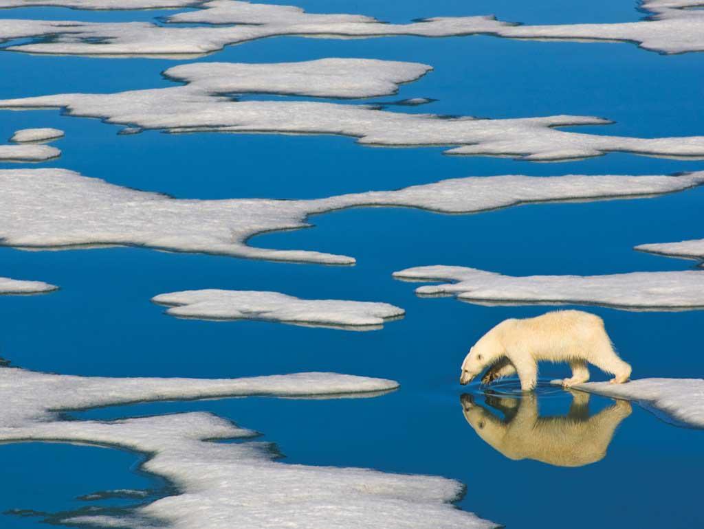 Polar Bear on Ice Bears Jigsaw Puzzle