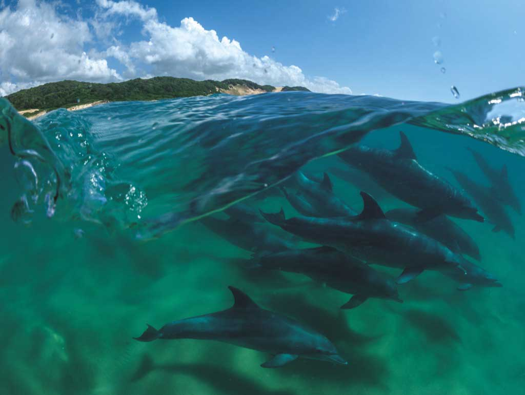Bottlenose Dolphins Dolphins Jigsaw Puzzle