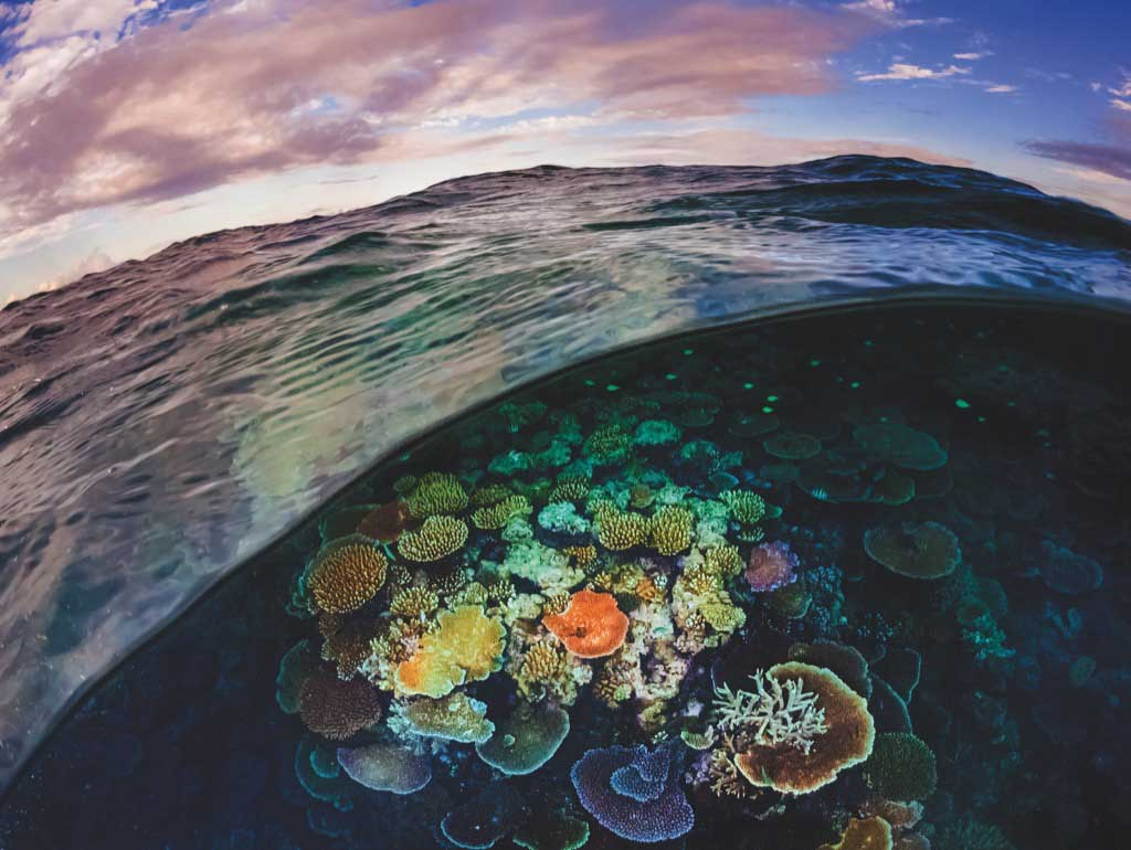 Great Barrier Reef Under The Sea Jigsaw Puzzle