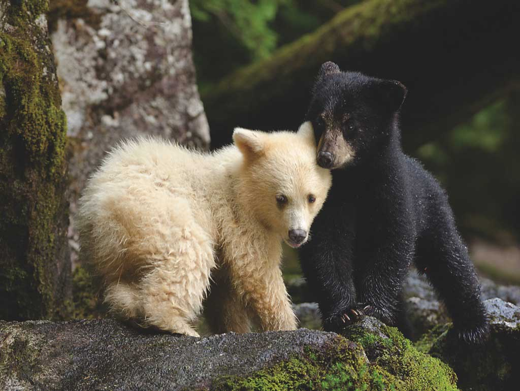 Bear Buddies Bears Jigsaw Puzzle