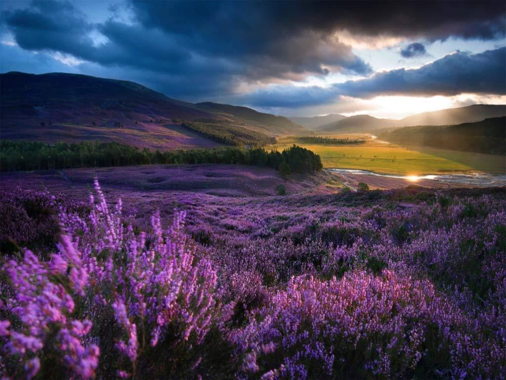 Heathered Highland Glen Flowers Jigsaw Puzzle