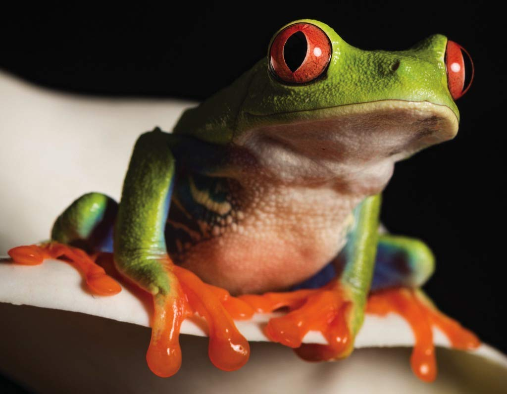Red Eyed Tree Frog (Mini) Photography Jigsaw Puzzle