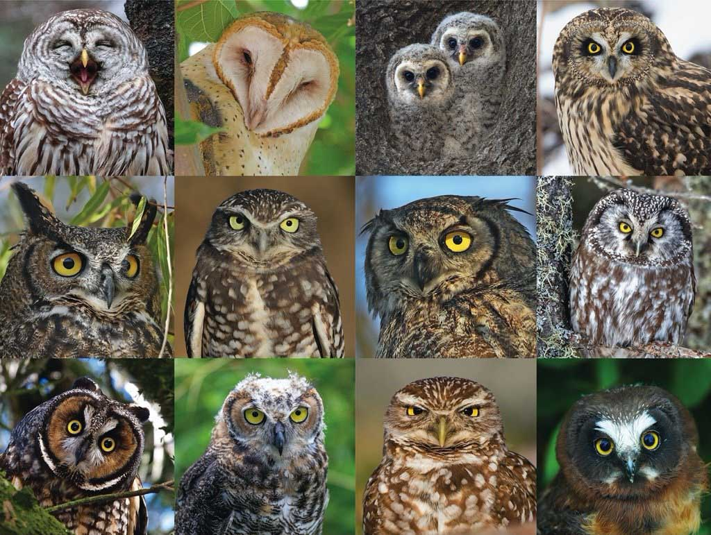 Owls and Owlets Photography Jigsaw Puzzle