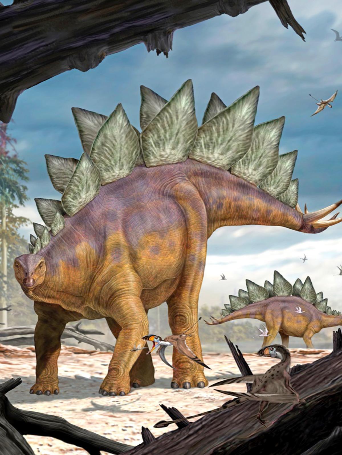 Stegosaurus Dinosaurs Jigsaw Puzzle