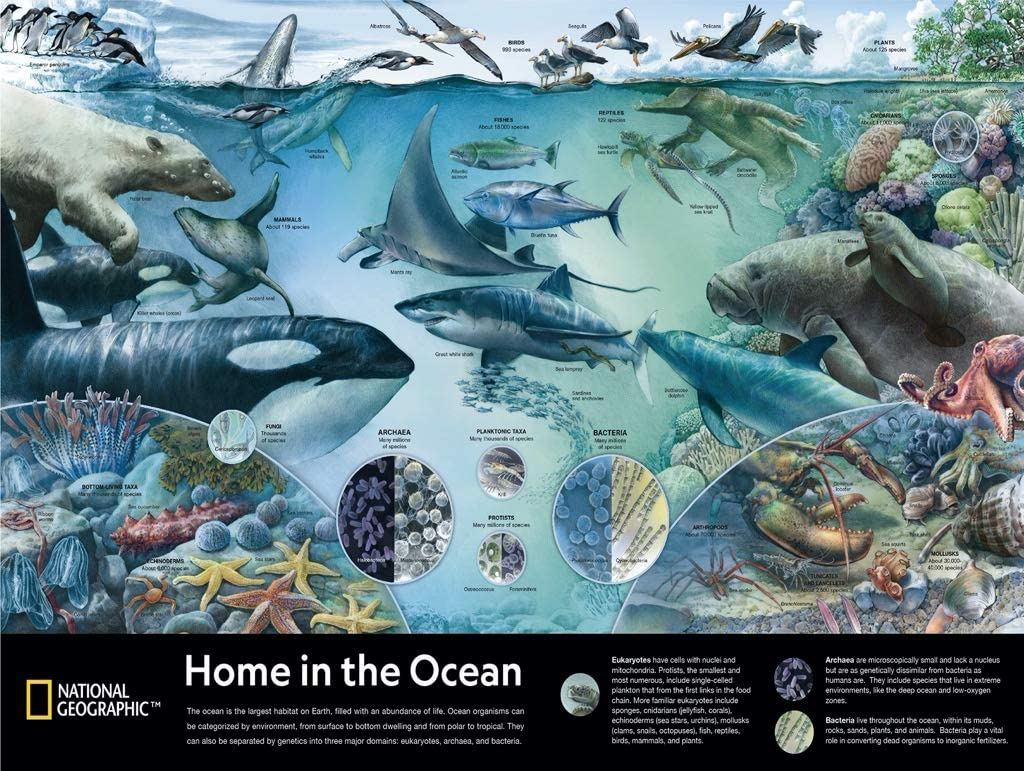 Home in the Ocean Animals Jigsaw Puzzle