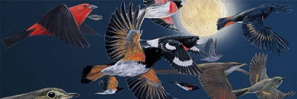 Nocturnal Migration Birds Jigsaw Puzzle
