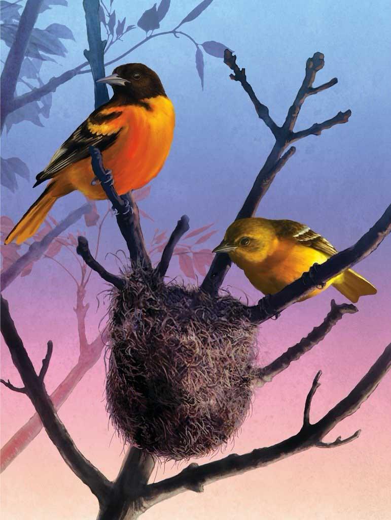 Orioles Birds Jigsaw Puzzle