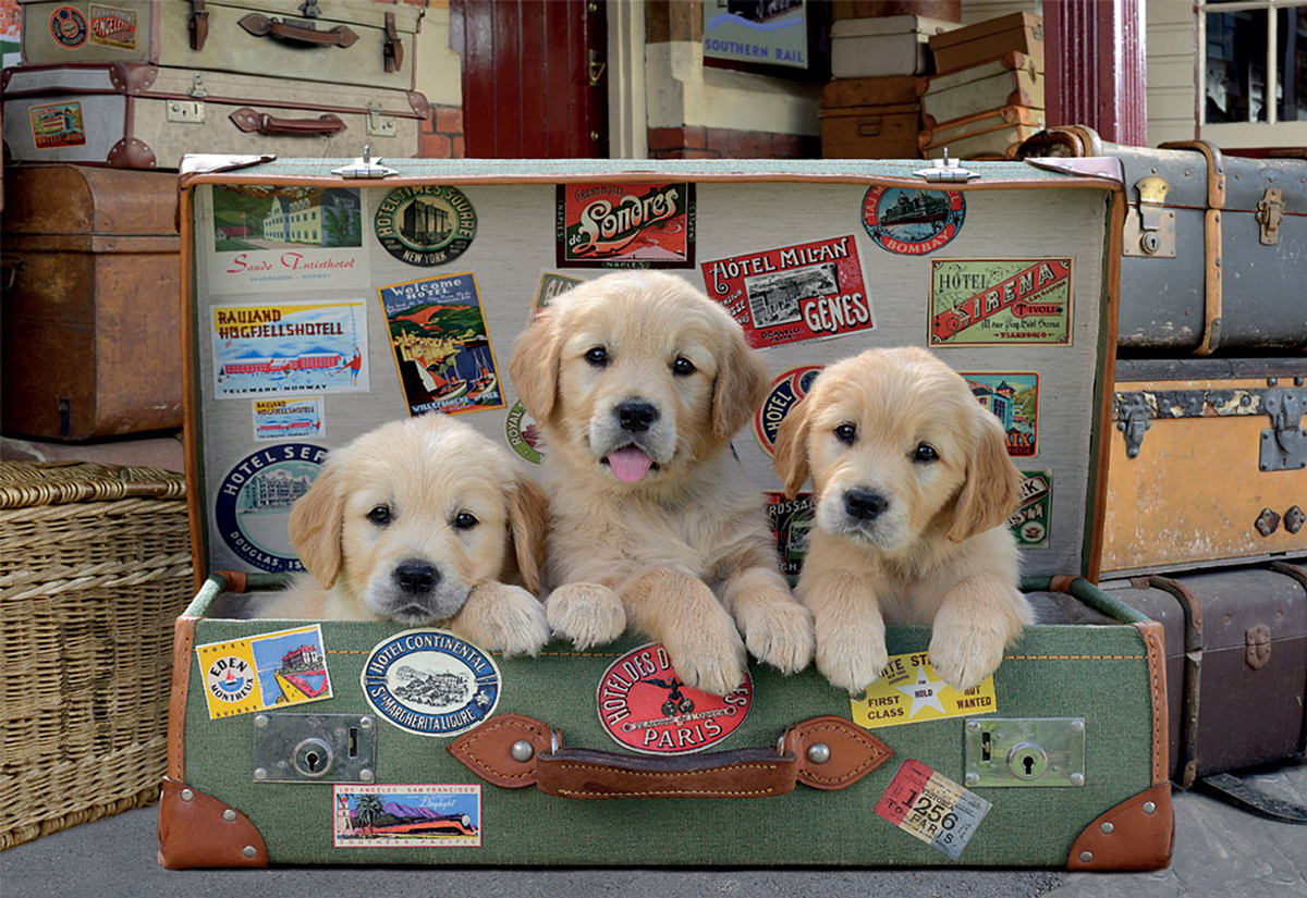 Puppies in the Luggage Animals Jigsaw Puzzle