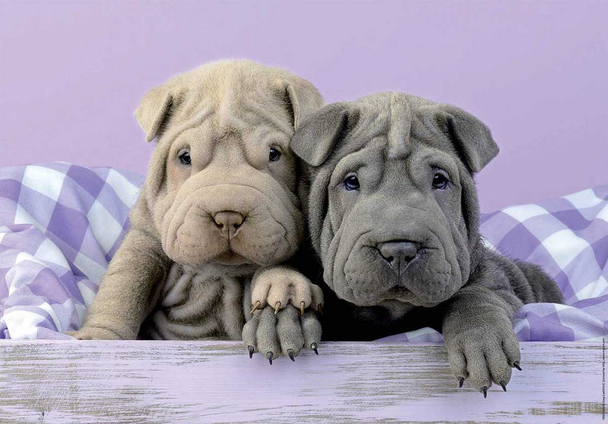Too Early to Get Up Dogs Jigsaw Puzzle