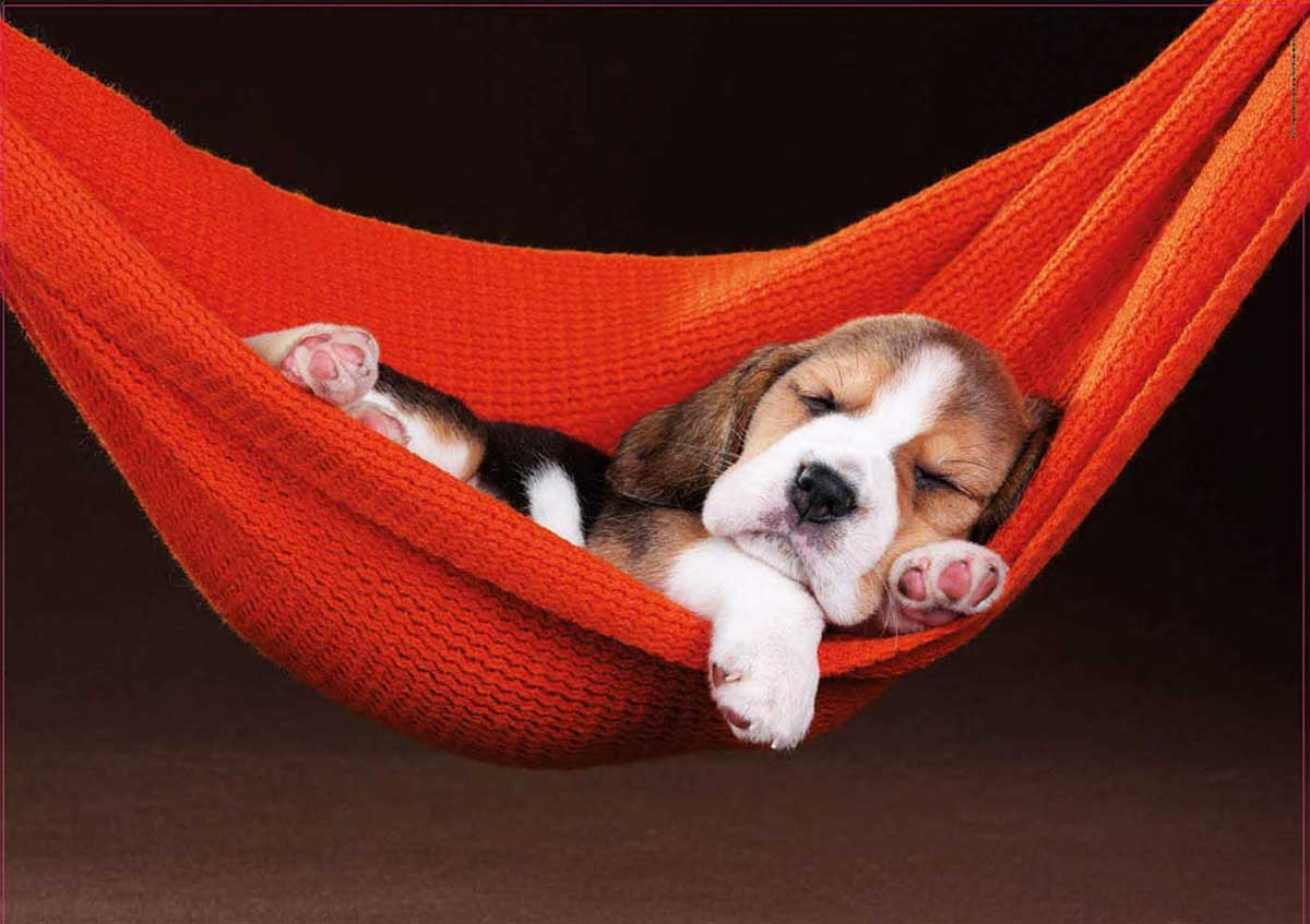 Sleeping In A Hammock Dogs Jigsaw Puzzle