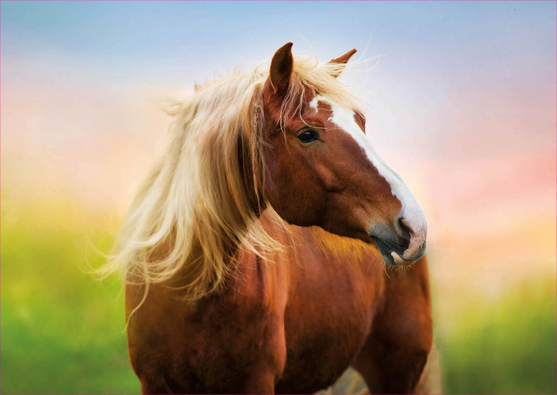 Horse At Sunrise Horses Jigsaw Puzzle