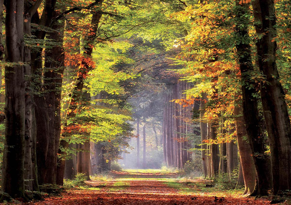 Fall Walkway Fall Jigsaw Puzzle