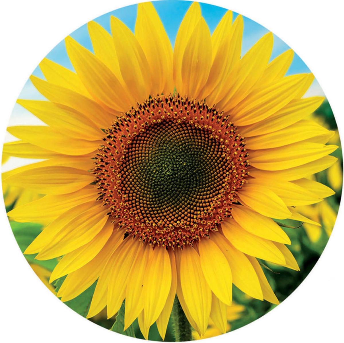 Sunflower Flowers Jigsaw Puzzle