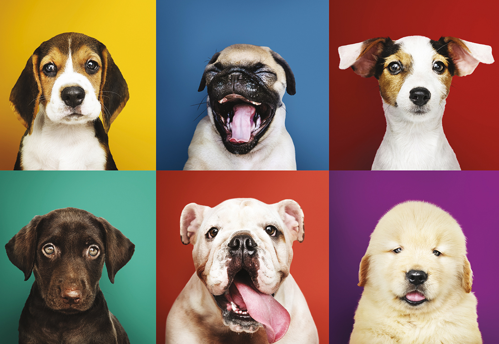 Puppy Portraits Animals Jigsaw Puzzle