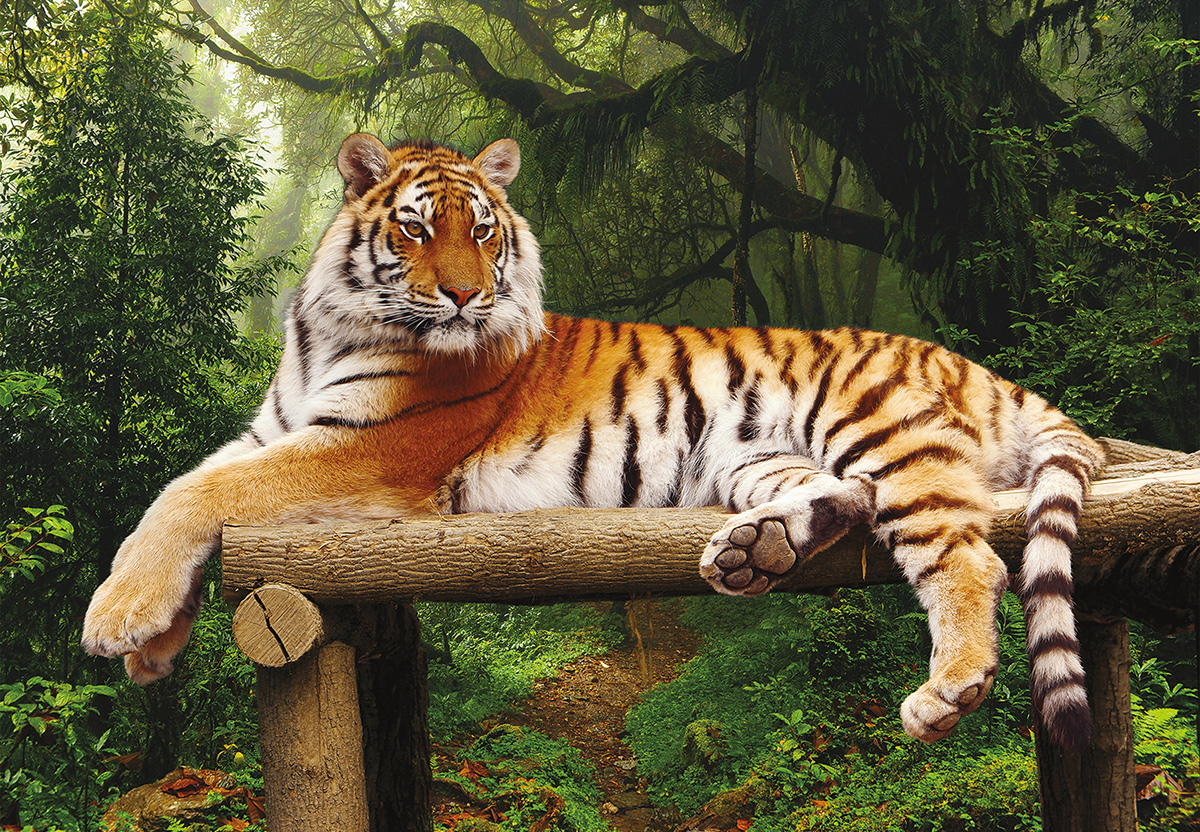 Majestic Tiger Wildlife Jigsaw Puzzle