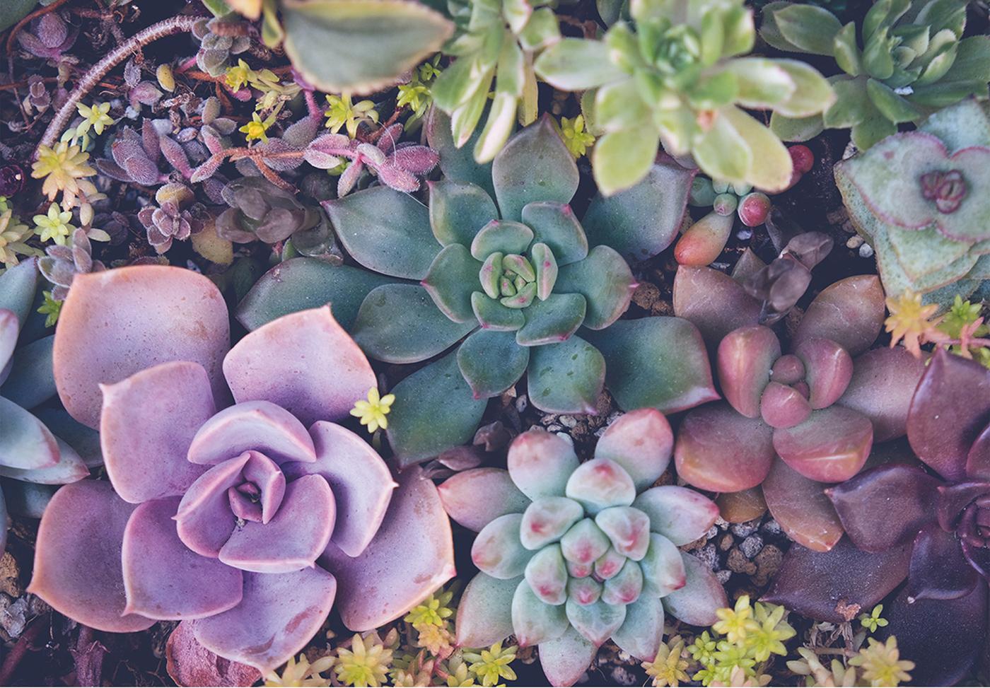 Succulents Flowers Jigsaw Puzzle
